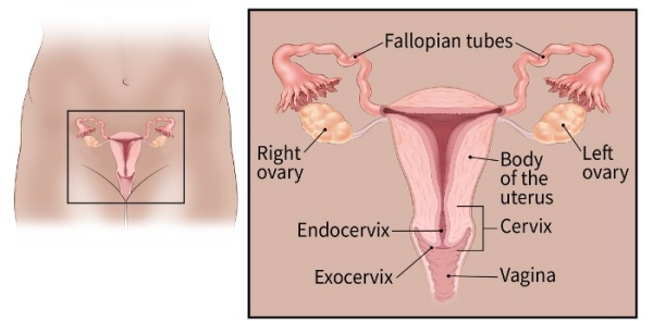 cervical cancer where does it spread