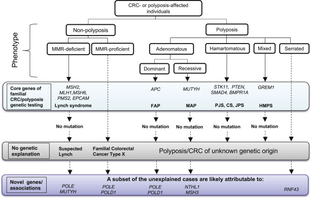 colorectal cancer genes involved