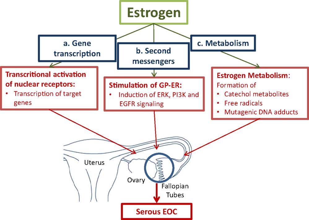 ovarian cancer etiology papiloma humano en boca sintomas