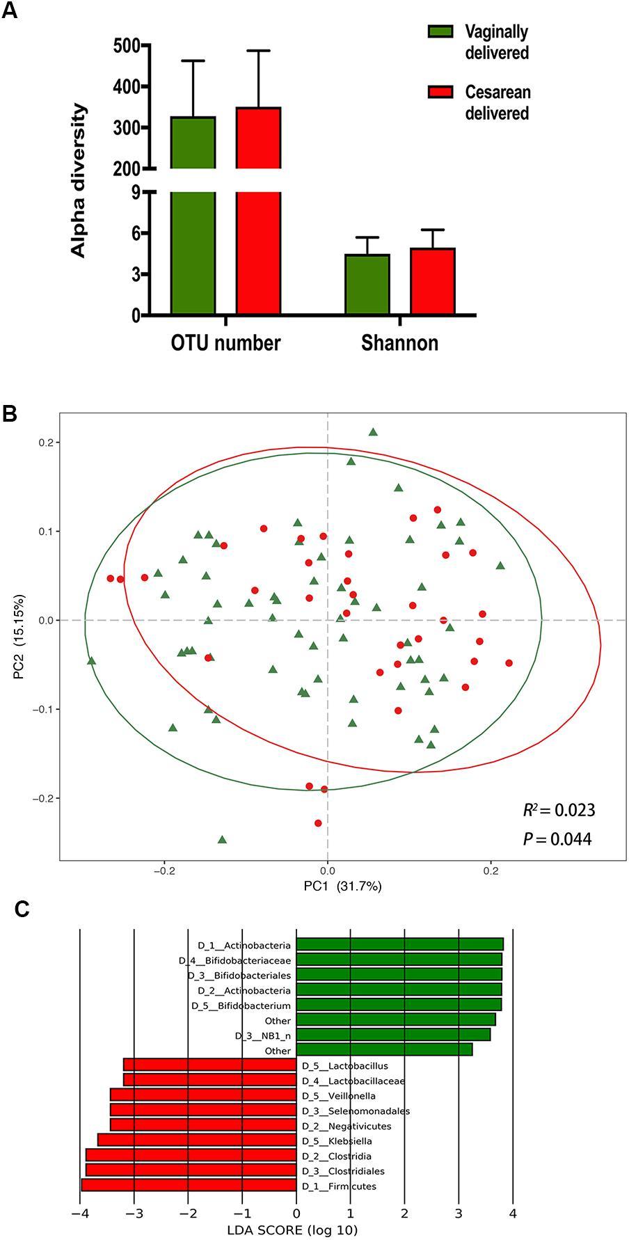 papillon zeugma agentia kusadasi human papillomavirus in esophageal cancer