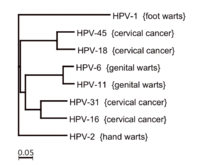 hpv cancer strains