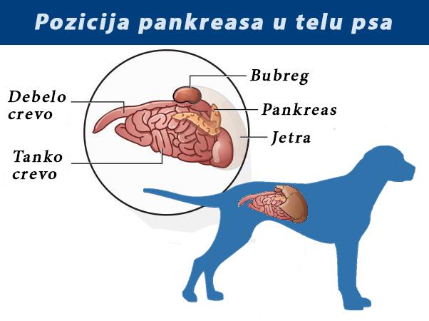 Parazit tableta l