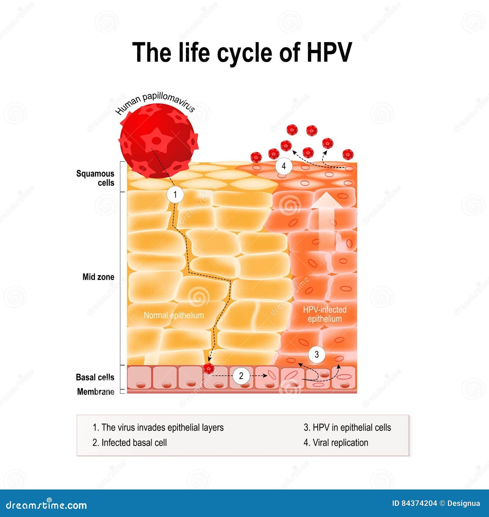 papilloma virus zone contagio da papilloma virus