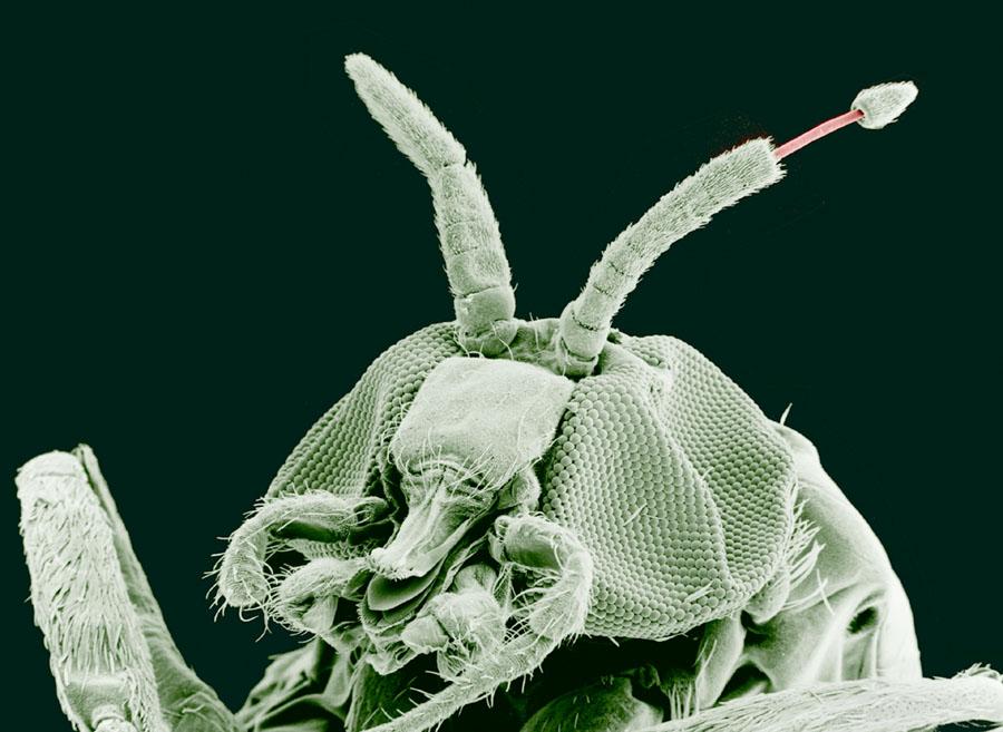 paraziti brad cancerul bucal