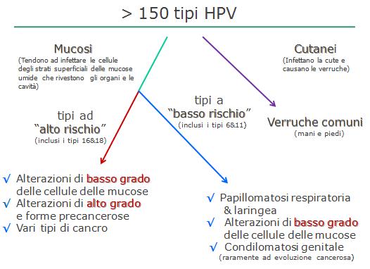 hpv ad alto rischio uomo eozinofile paraziti intestinali