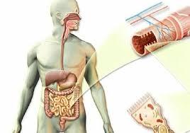 otkrivanje parazita u organizmu