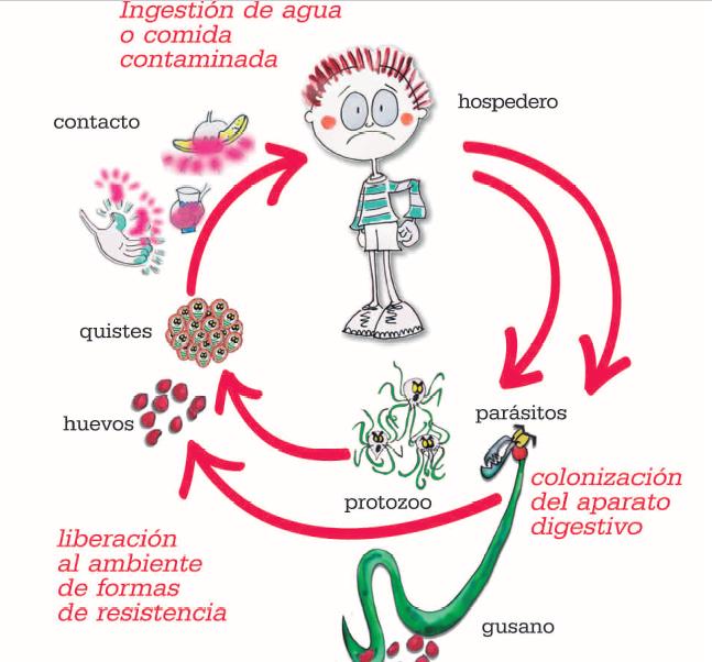 papillomavirus infection in males dezintoxicare prahova