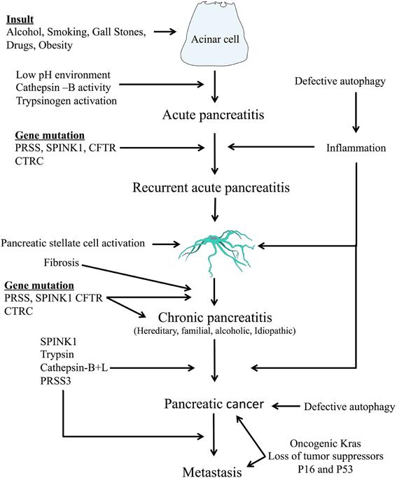 pancreatic cancer etiology helmintox 250 mg kaufen