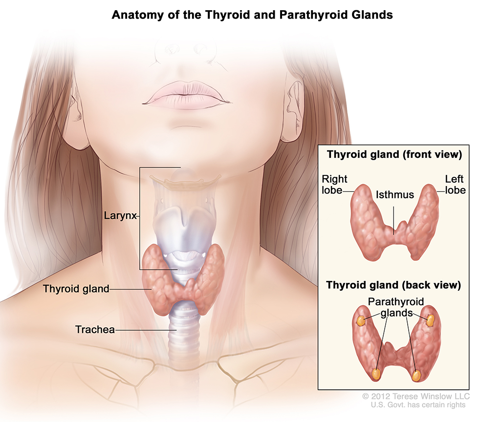 papillary thyroid cancer young male