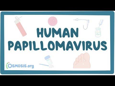 papilloma virus uomo vaccini