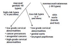 hpv feigwarzen entfernen papilomavirusul uman (hpv)