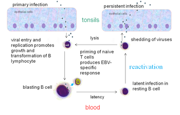 etiology of papillomatosis parazitoza simptome