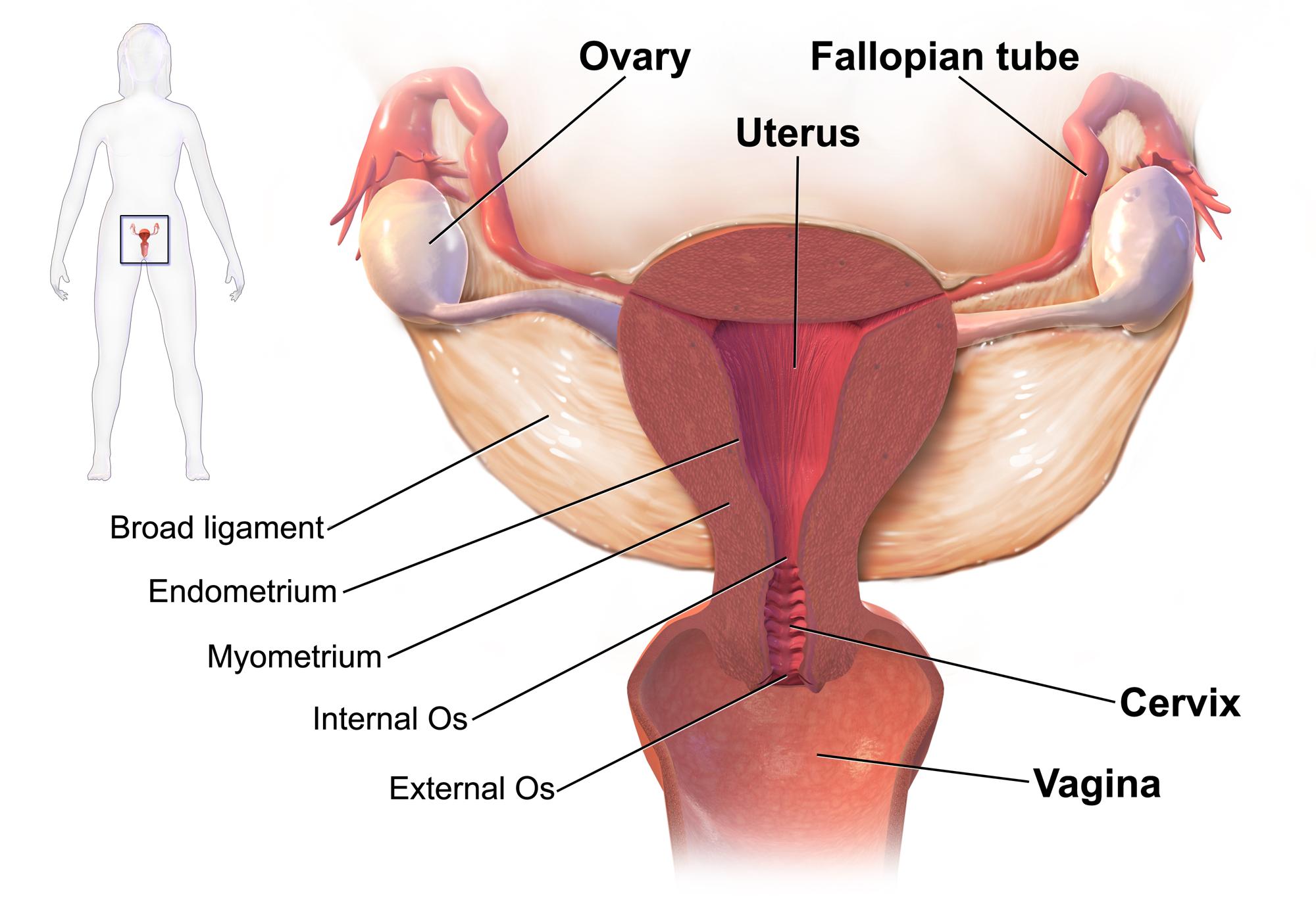 tratamento para o verme oxiurus cancer mamar tratament chirurgical