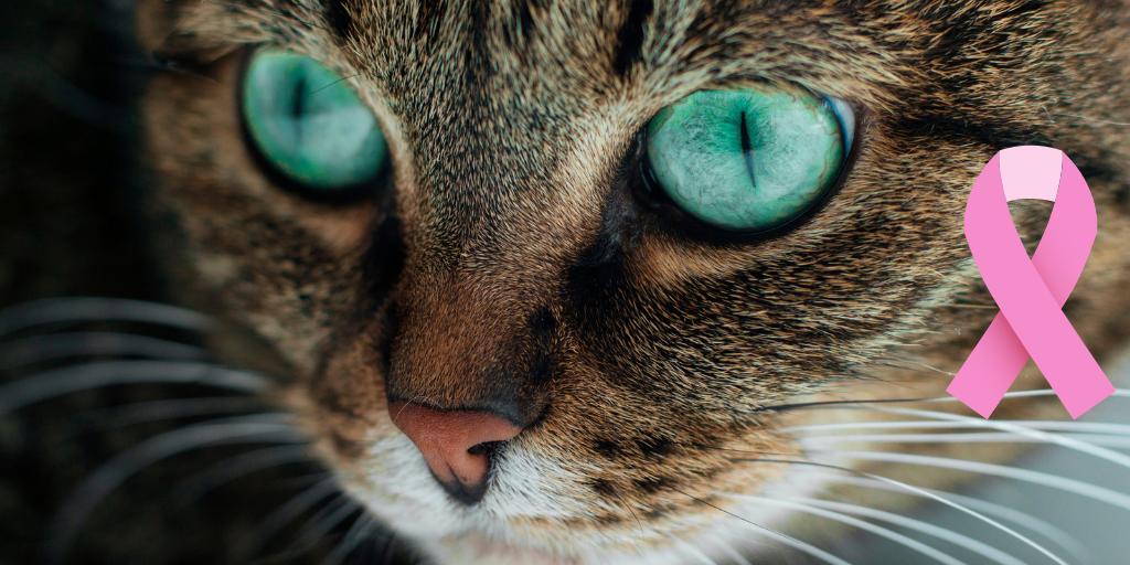 Carcinomul scuamocelular la pisică − diagnostic diferenţial şi abordare terapeutică multimodală