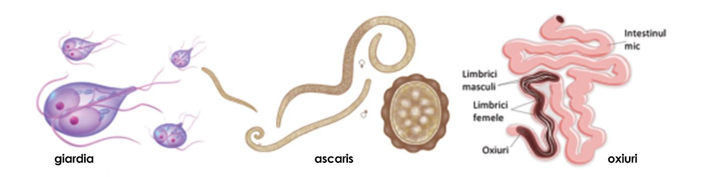 ovarian cancer abdominal mass papillomavirus sur homme