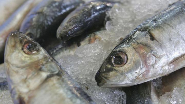 Cele mai mari pericole din preparatele cu pește crud | PUBLIKA .MD - AICI SUNT ȘTIRILE