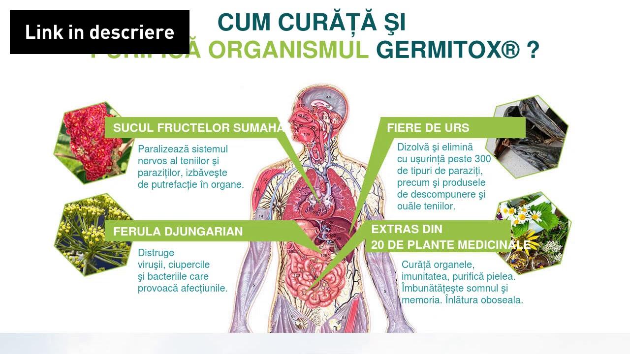 unde organele sunt parazitul principal viermi medicamente noi ascorbidoză