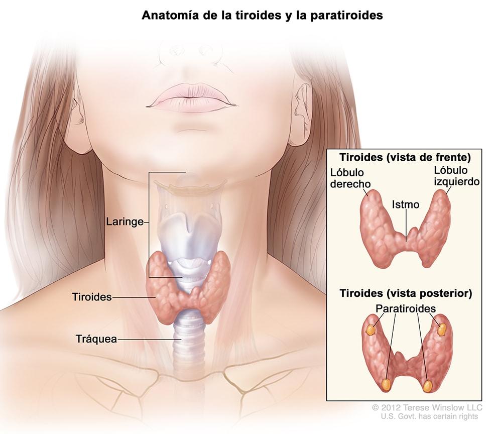 que es cancer de tiroides