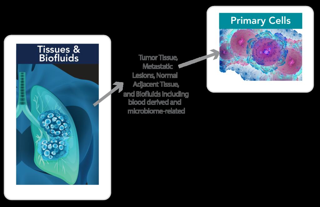 parazitii in corpul uman imagenes de papiloma humano en la boca