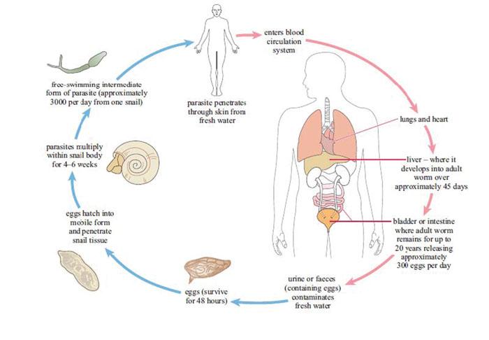 Criteriile medicale de eligibilitate pentru utilizarea contraceptivelor by Neovita - Issuu