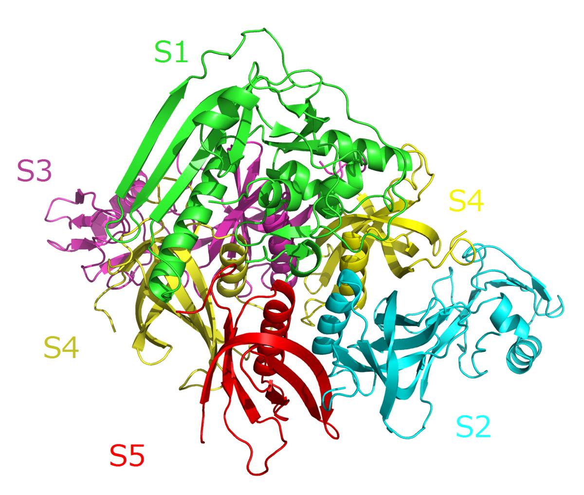 toxin 5 cancer esofagian stadializare