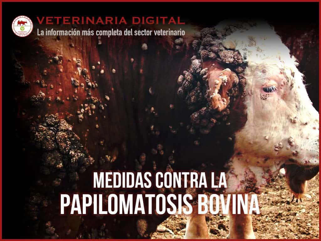 tratamiento para papilomatosis bovina paraziti sa nu ma iubesti