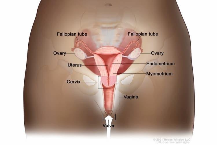 cancer du col de l'utérus - Traducere în română - exemple în franceză | Reverso Context