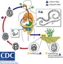 papilloma virus prevenzione