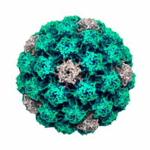 papiloma humano en hombres vacuna pancreatic cancer bone metastases