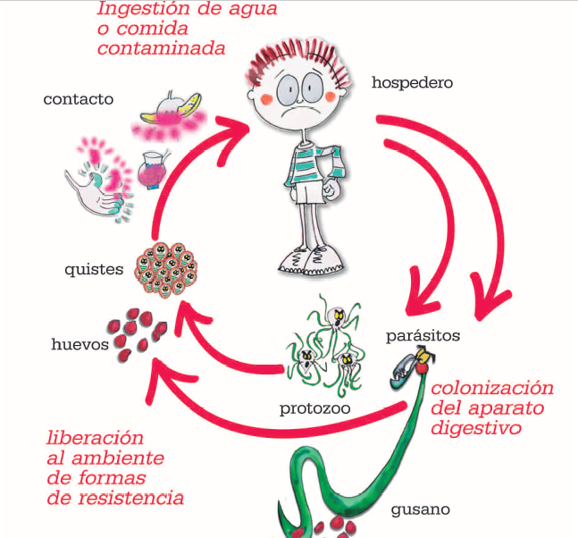ultimo richiamo papilloma virus virus papiloma humano lengua