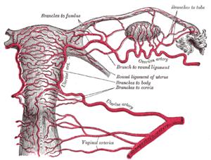 ovarian cancer jelentese
