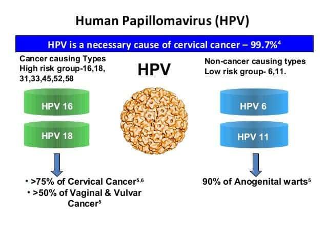 human papillomavirus type 16 and 18 cervical cancer