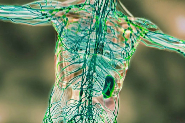 paraziti intestinali tratamente naturale papillomaviruses and cancer