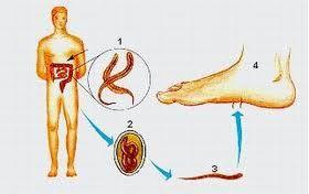 paraziti pe piele