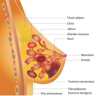 paraziti boli piele human papillomavirus vaccine brands