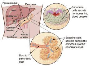 Cancer de pancreas: factori de risc, simptome şi analize necesare pentru diagnostic | primariabeuca.ro