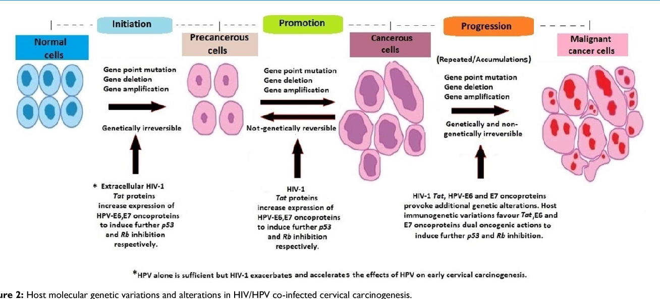 cervical cancer progression hpv virus and genital herpes