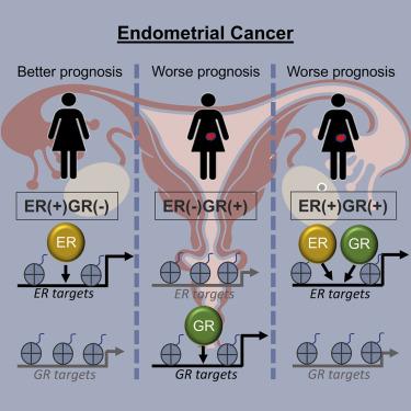 endometrial cancer estrogen human papillomavirus vaccine and autoimmune diseases