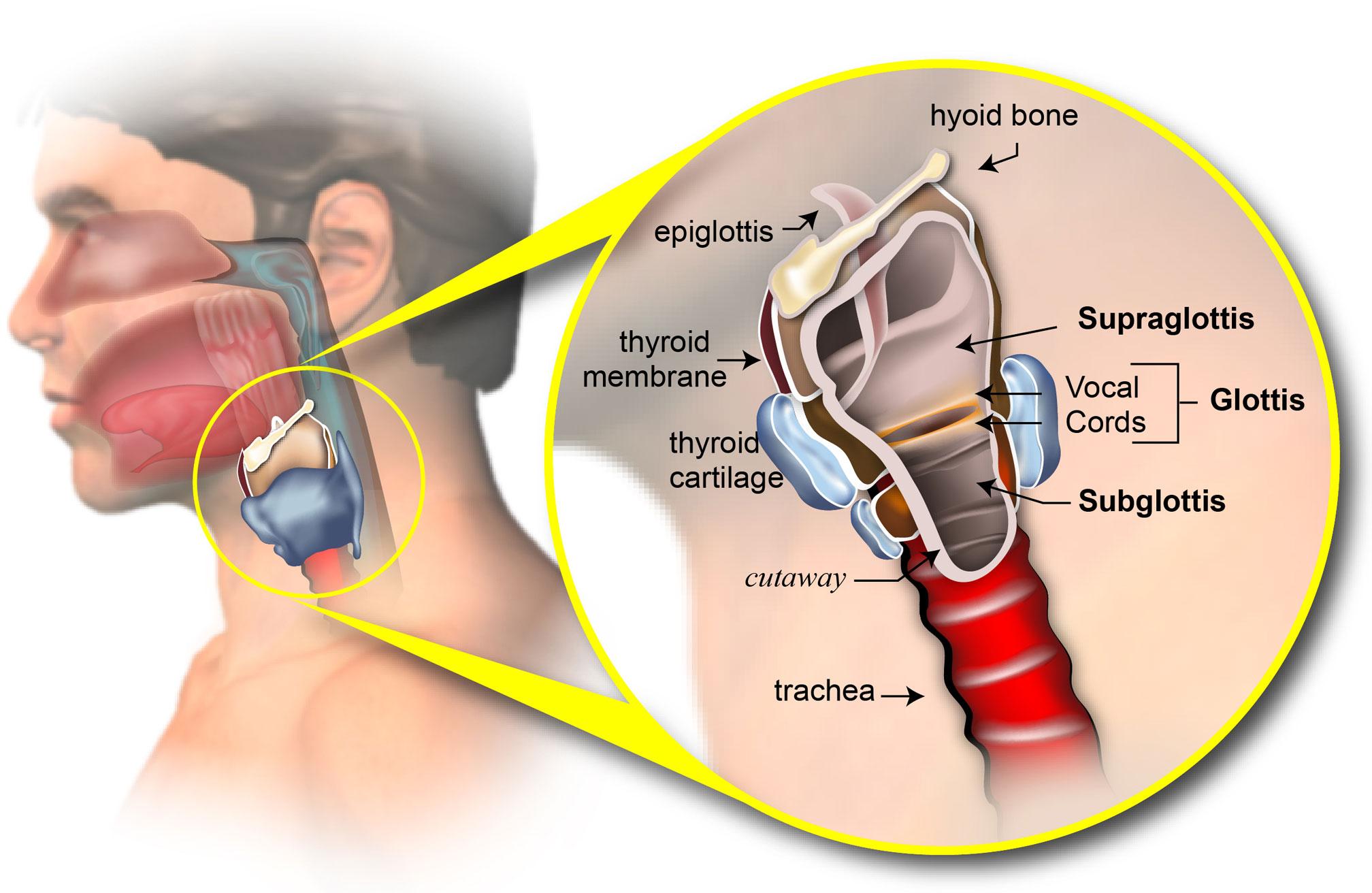 hpv cancer larynx