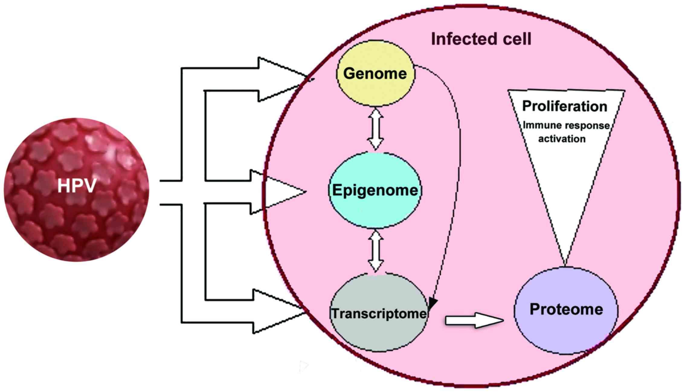 human papillomavirus infection in neonates