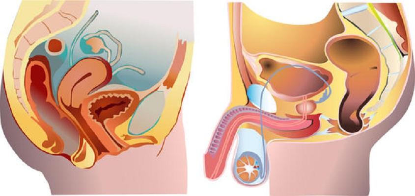 cancer la uretra test per papilloma virus gola