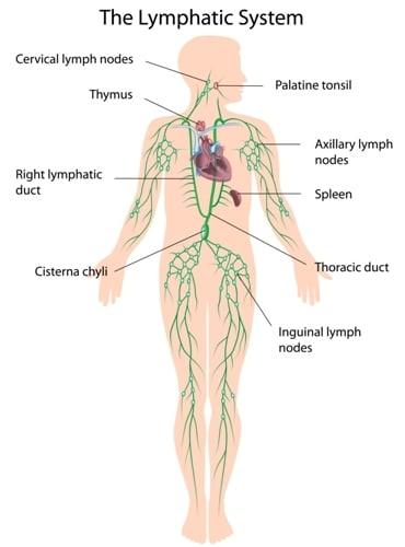 gastric cancer lymph node metastasis