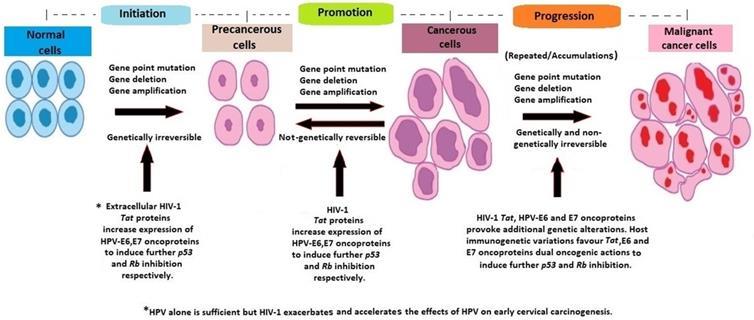 hpv cervical cancer mechanism