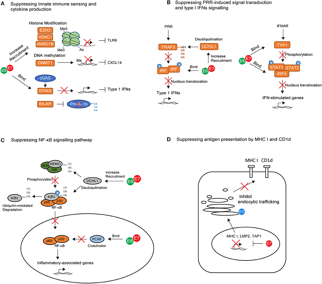 hpv cervical cancer mechanism hpv virus pap test
