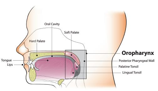 hpv virus head and neck cancer