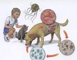 Cauzele aparitiei de viermisori la copii - Ce tratament este indicat?